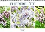 Fliederblüte (Wandkalender 2019 DIN A2 quer): Flieder macht glücklich und betört im Mai mit seinem Duft (Monatskalender, 14 Seiten ) (CALVENDO Natur)