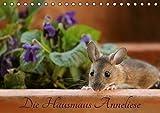 Die Hausmaus Anneliese (Tischkalender 2017 DIN A5 quer): Anneliese, eine ganz besondere Hausmaus (Monatskalender, 14 Seiten) (CALVENDO Tiere)
