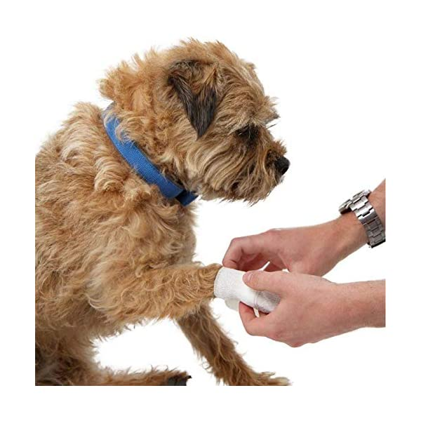 Mountain Paws Dog First Aid Kit 3
