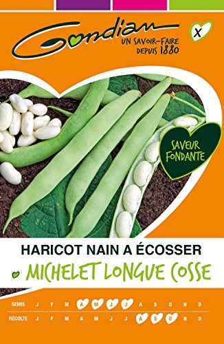 Gondian 63205 CP X ou CP 1 Semences Haricot Nain ▒ Ecosser Michelet Longue Cosse Vert - 250g (environ 480 graines)