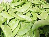 Go Garden 25 Nongmo china deliciosa de frijol jacinto Semillas 2018 Hermosa flor blanca? / ???