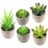 Plantas Suculentas Artificiales 5PCS Jardinera Suculenta Falso Plantas de Cactus Faux en Macetas Plantas Suculentas Pequeñas