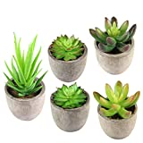 KidsHobby Artificiale piante grasse, 5PCS falso succulente vaso assortiti Faux cactus in vaso per piante, piccole piante grasse con grigio vasi per home office