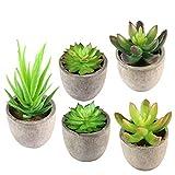 KidsHobby Künstliche Sukkulenten Pflanzen 5er Set kunstpflanzen mit topf für Haus/Büro