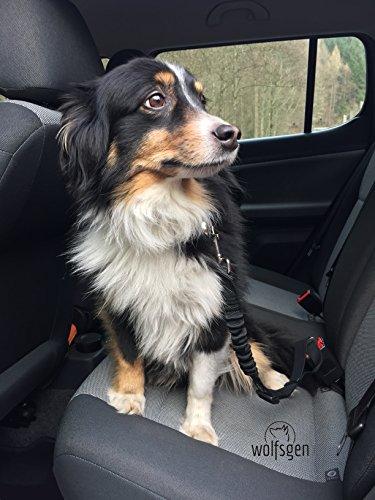 Hunde Sicherheitsgurt fürs Auto – komfortabler, sicherer Hundegurt mit flexiblem Ruckabsorber – stufenlos verstellbar – für nahezu alle Rassen und Fahrzeuge - 6