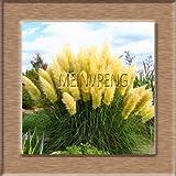 Shopmeeko Seeds: New 2018 100 Stück Pampas-Gras Bonsai Cortaderia selloana Blume Pflanze Wasserpflanzen Dekoration Hausgarten-Blumen: Rot