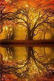 Autumn/Fall Tree Reflection Journal