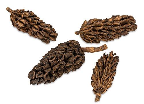 NaDeco Magnolien Zapfen ca. 5-12cm 0,5kg | Magnolia grandiflora | Magnolienfrucht | Getrocknete Magnolien Blüten | Naturdeko | Trockenblumen