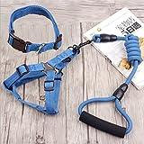 Kathy Lee Hundeleine mit Halsband, verstellbares Hundegeschirr mit Halsband für das tägliche Laufen, für große und kleine Hunde