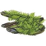 Tropica Vesicularia dubyana Christmas Moss 1-2-Grow Tissue Culture In Vitro Live Aquarium Plant Shrimp Safe & Snail Free 6