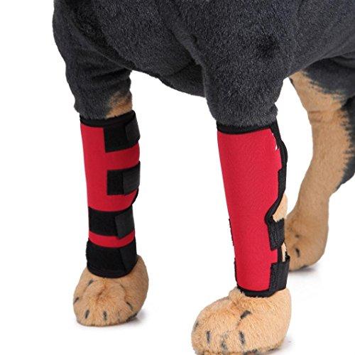 AmaMary hunde gelenkschutz, Hundehalsband mit extra unterstützender Hinterbeinbeinschutz schützt die Wunden (M, rot) (Spitze Sprunggelenk Schiene)