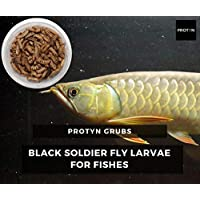 ProtynGrubs BSF Live Larvae Treat - Food for Aquarium Fishes - High Protein and 50x More Calcium Than Mealworm (100 Larvae)