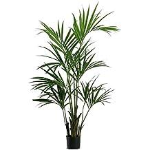 Kentia palmeras artificiales for Kentia pianta