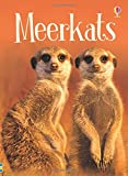 Meerkats (Beginners)