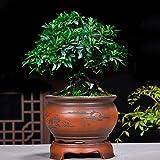 Argilla Viola Vaso di Fiori Boutique Bacino di Orchid Coperta Tavolo Bacino di pianta Clivia Asparago Rivestimento Ceramica Vaso di Fiori-D