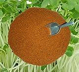 Kressesamen Gartenkresse Grossblättrige 1kg frische Ware, Samen