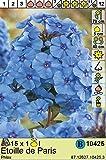 Phlox paniculata - Flammenblume