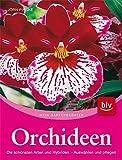 Orchideen: Die schönsten Arten und Hybriden. Auswählen und pflegen
