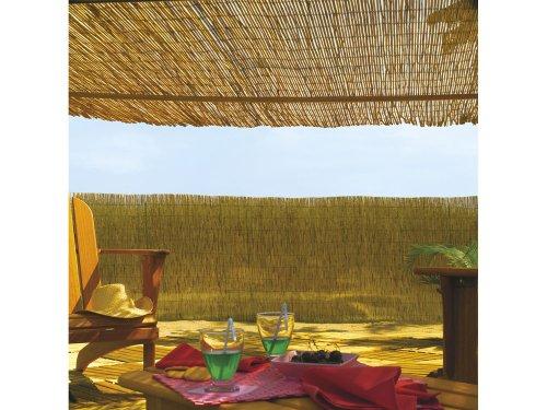 170970 - Bambú Chino Reedcane