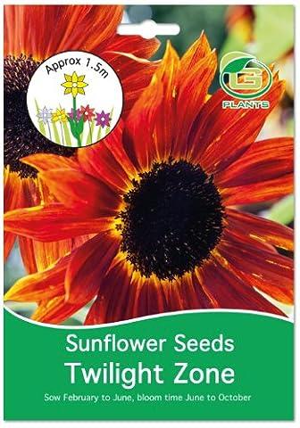 G Plants großen, leicht Packungen Samen Sonnenblumen, Twighlight