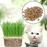 Dabixx 400Pièces 100% Bio Cat Herbe Graines de blé Herbe à Chat sains Plante pour friandises pour Animaux de Compagnie Vert