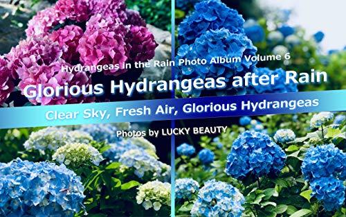 Glorious Hydrangeas after Rain - Hydrangeas in the Rain Photo Album Volume 6: Clear Sky, Fresh Air, Glorious Hydrangeas (English Edition)