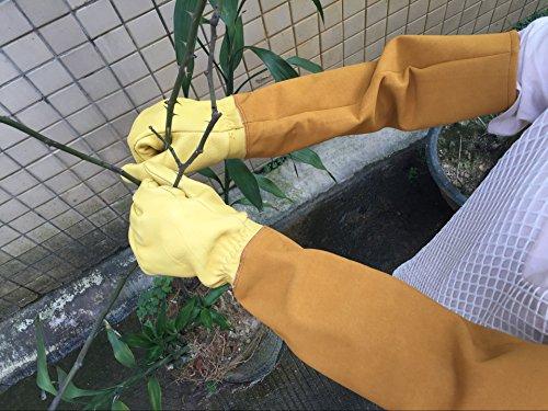 HANSHI Garten-und Arbeitshandschuhe Rose beschneiden Anti-Dorn Die Länge bis Ellbogen schützt Ihre Arme Nützliche Gartenhandschuhe für Frauen und Männer bei Gartenbau Beschneiden Pflücken Stutzen usw - Rosen Beschneiden