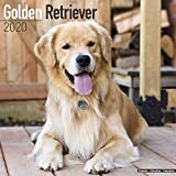 Golden Retriever Calendar 2020