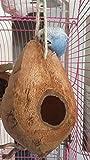 Vogelschaukel aus Kokosnuss