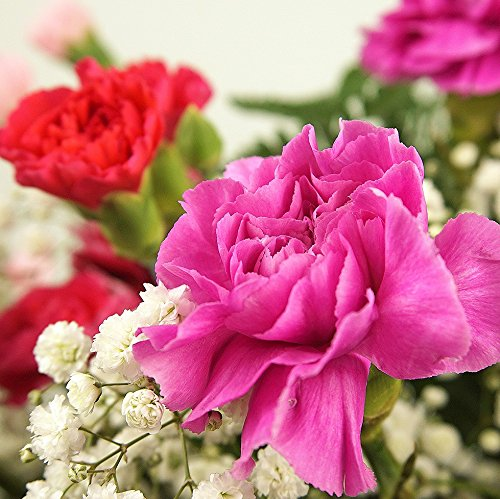 Pink carnation fresh flower bouquet delivered in 1hr timeslot pink carnation fresh flower mightylinksfo
