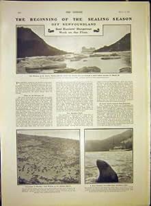 Otarie d'Alaska de chasse à phoque de Terre-Neuve de cachetage 1903