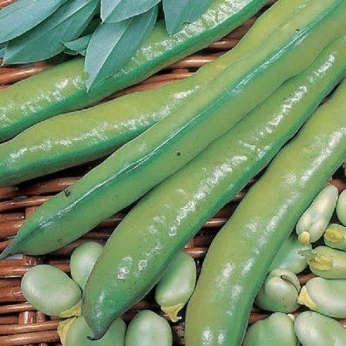 seekay Ackerbohne AquaBar 30 Samen Herbst - Aussaat im Frühjahr