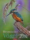 Heimische Vögel - Kalender 2018