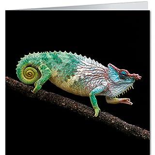Greeting Card 16,5x16,5cm geo Modern Time + + Camouflage + + BK Edition Geo Arndt, Ingo