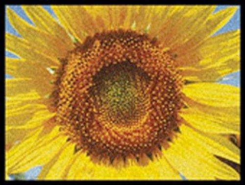 Fußmatte Schuhablage - Sonnenblume - Sunflower 45x60 cm