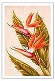 Pacifica Island Art Paradiesvogel, Hawai'i von Ted Mundorff c.1940s - hawaiianischer Kunstdruck - 76cm x 112cm