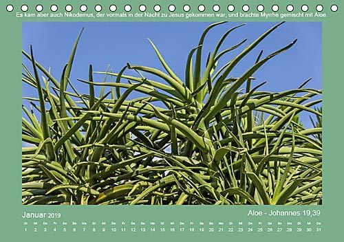 Pflanzen der Bibel (Tischkalender 2019 DIN A5 quer): Eine Auswahl in der Bibel erwähnter Pflanzen mit den passenden Bibelstellen. (Monatskalender, 14 Seiten ) (CALVENDO Glaube)