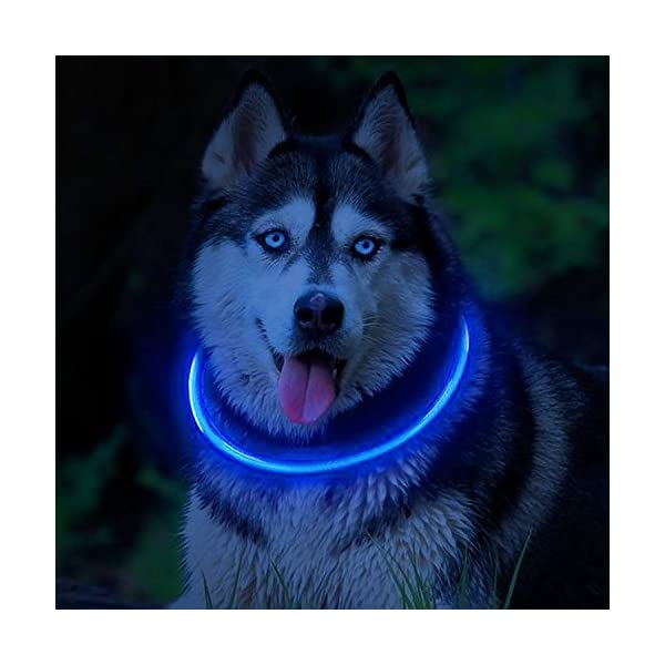 PetSol Ultra Bright USB Rechargeable LED Dog Safety Collar 8