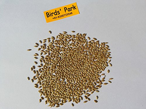 Birds' Park Bird Food Natural Fresh Alpiste Canary Seed Imported Best Quality Seed