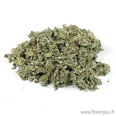 Floranjou - Artichaut feuille - Nom botanique : Cynara scolymus