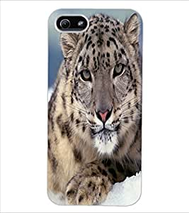 ColourCraft Tiger Look Design Back Case Cover for APPLE IPHONE 5S