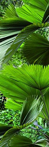 PLAGE Hojas Tropicales Vinilo Adhesivo Cocina, Verde