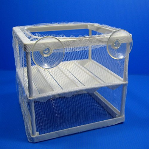 obtentor-trampa-net-criadero-separacion-incubando-caja