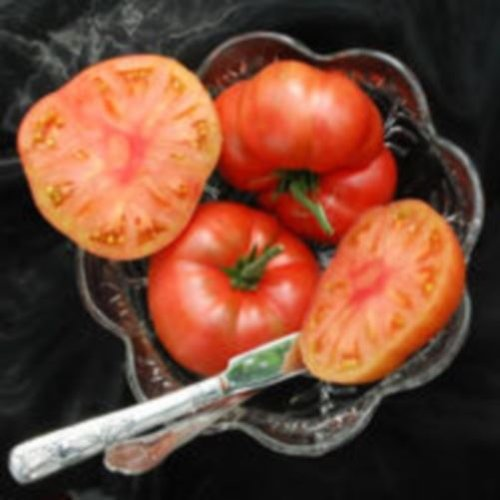 Just Seed Gemüse Tomate Marianna 's Peace 15 Samen - Sinnlich-cremig