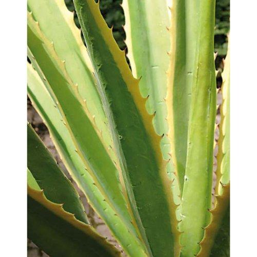 artplants Set 2 x Künstliche Agave mit 21 Blättern, grün-gelb, 120 cm – künstliche Dekorationspflanzen