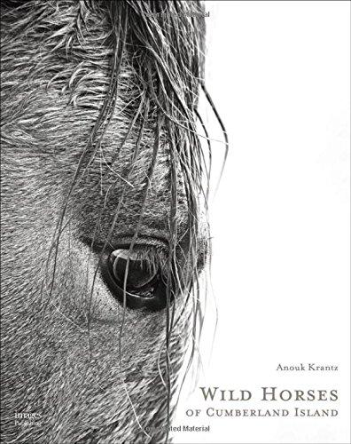 Wild Horses of Cumberland Island