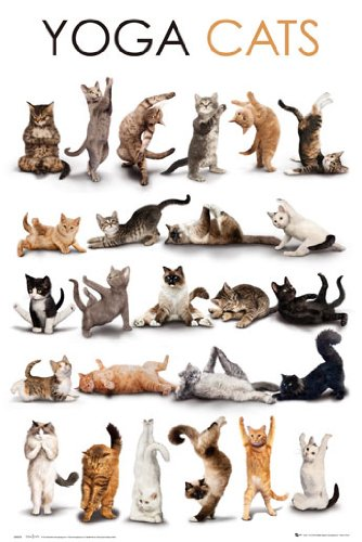 YOGA CATS Poster, 61x92