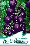 AST Works Utility Fad 1 Bag 20 Seeds Heirloom Purple Tomato Seed Pack Green Vegetable EFCA