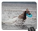 Gaming-Mauspads, Mauspad, Weimaraner Animal Dog Schnauze Wasser nass Pelzwasser 2