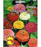 Vivai Le Georgiche Zinnia Lilliput Pompon Doppia Miscuglio (Semente)
